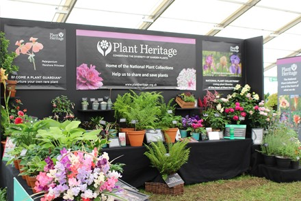 Plant Heritage showcases fascinating plant collections at RHS Hampton Court Palace Garden Festival  2-7July 2019